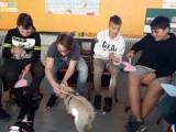 Schulhund1